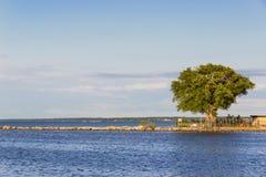 Paisaje del VERANO Árbol verde hermoso en el lago Ontario Rochester, los E.E.U.U. Imagenes de archivo
