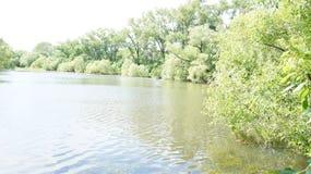 Paisaje del verano, árboles en la orilla de la charca Fotos de archivo libres de regalías