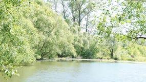 Paisaje del verano, árboles en la orilla de la charca Imagen de archivo