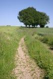 Paisaje del verano Imagen de archivo