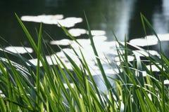 Paisaje del verano Imagenes de archivo