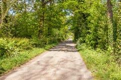 Paisaje del verano abajo de un carril del país en el campo de Herefordshire Fotos de archivo