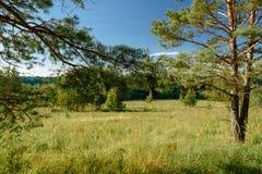 Paisaje del verano, campos verdes en el fondo del bosque y cielo Imágenes de archivo libres de regalías