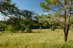 Paisaje del verano, campos verdes en el fondo del bosque y cielo Fotos de archivo libres de regalías