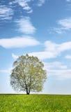 Paisaje del verano con el árbol solo Fotos de archivo libres de regalías