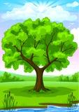 Paisaje del verano con el árbol viejo Foto de archivo libre de regalías