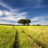 Paisaje del verano con el árbol y el camino Imágenes de archivo libres de regalías