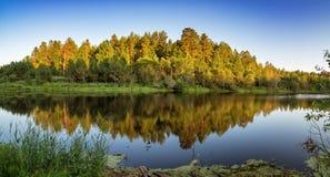 Paisaje del verano con el bosque del pino en la orilla de un lago, Rusia, Ural Imágenes de archivo libres de regalías