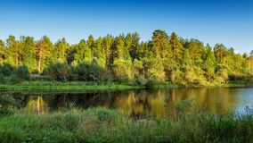 Paisaje del verano con el bosque del pino en la orilla de un lago, Rusia, Ural Imagen de archivo