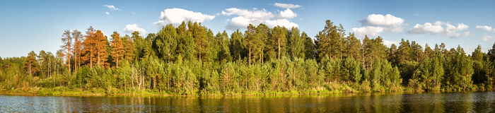 Paisaje del verano con el bosque del pino en la orilla de un lago, Rusia, Ural Foto de archivo libre de regalías