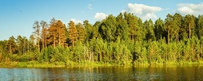 Paisaje del verano con el bosque del pino en la orilla de un lago, Rusia, Ural Fotos de archivo