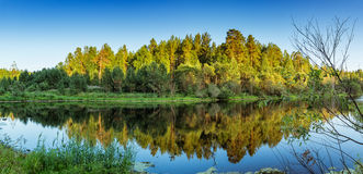 Paisaje del verano con el bosque del pino en la orilla de un lago, Rusia, Ural Fotos de archivo libres de regalías