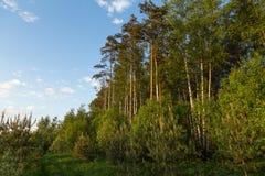 Paisaje del verano con el bosque y el cielo azul Foto de archivo
