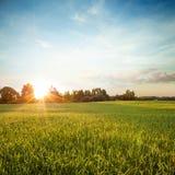 Paisaje del verano con el campo verde en la puesta del sol Fotografía de archivo libre de regalías