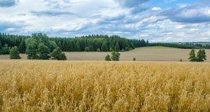 Paisaje del verano con el campo y el prado Fotos de archivo