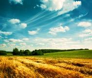 Paisaje del verano con el campo y las nubes de trigo Imágenes de archivo libres de regalías