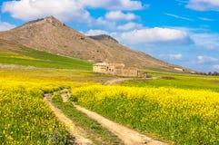 Paisaje del verano con el cielo azul y el trigo verde Fotografía de archivo libre de regalías