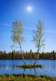 Paisaje del verano con el lago y el abedul dos Fotografía de archivo