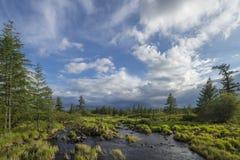 Paisaje del verano con el río, cielo nublado, bosque e hierba y flores Imágenes de archivo libres de regalías
