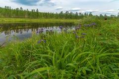 Paisaje del verano con el río, cielo nublado, bosque e hierba y flores Imagenes de archivo