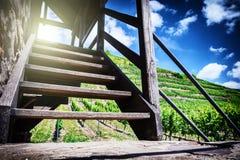 Paisaje del verano con el viñedo y las escaleras para mirar la torre Foto de archivo