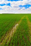 Paisaje del verano con la hierba verde Imagenes de archivo