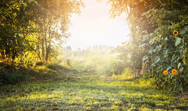 Paisaje del verano, con la hierba verde y los árboles, flores amarillas con el cielo de la luz del sol, fondo natural Foto de archivo libre de regalías