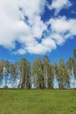 Paisaje del verano con las nubes y la fila de abedules sobre una colina Fotos de archivo libres de regalías