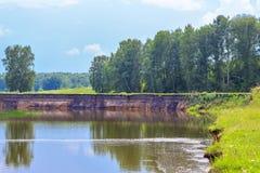 Paisaje del verano con los árboles de abedul en el río Foto de archivo libre de regalías
