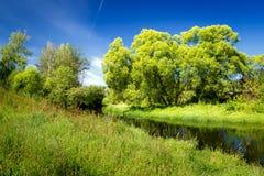 Paisaje del verano con los árboles verdes, y un río Imagen de archivo libre de regalías