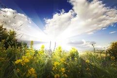 Paisaje del verano con los rayos del sol, las nubes, el cielo azul y las flores amarillas Imágenes de archivo libres de regalías