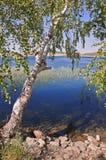 Paisaje del verano con un abedul en la costa del lago Fotos de archivo libres de regalías