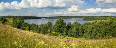 Paisaje del verano con un lago y flores salvajes Imagen de archivo