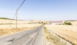 Paisaje del verano con una carretera de asfalto a través de los llanos, Villar de Torre, La Rioja, España Fotografía de archivo