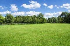 Paisaje del verano de la hierba y de los árboles Fotografía de archivo libre de regalías