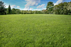 Paisaje del verano de la hierba y de los árboles Foto de archivo