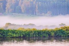 Paisaje del verano de la naturaleza y del río pintorescos del bosque Foto de archivo