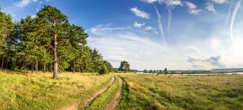 Paisaje del verano de la tarde con el árbol de pino enorme en los bancos del río y del camino de tierra, Rusia, Ural imágenes de archivo libres de regalías