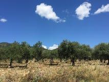 Paisaje del verano 2016 de Sicilia el Etna fotos de archivo