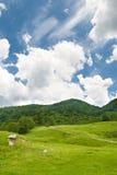 Paisaje del verano del bosque verde con el cielo azul Foto de archivo