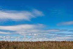 Paisaje del verano del campo de trigo Imagenes de archivo