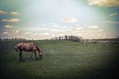 Paisaje del verano del vintage con el caballo en la pradera Fotografía de archivo libre de regalías