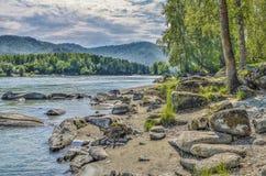 Paisaje del verano en el banco rocoso del río siberiano rápido Katun Foto de archivo libre de regalías