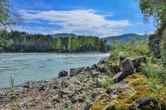 Paisaje del verano en el banco rocoso del río siberiano rápido Katun Imagen de archivo