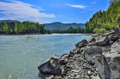 Paisaje del verano en el banco rocoso del río siberiano rápido Katun Foto de archivo