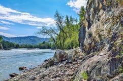 Paisaje del verano en el banco rocoso del río siberiano rápido Katun Imágenes de archivo libres de regalías