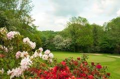 Paisaje del verano en el campo británico Foto de archivo