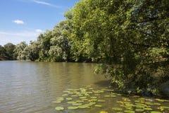Paisaje del verano en el lirio de la charca y de agua Foto de archivo