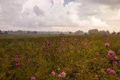 Paisaje del verano en el país en un día de niebla Foto de archivo libre de regalías