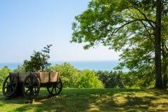 Paisaje del verano en jardín tropical Arboreto de Sochi Imagenes de archivo